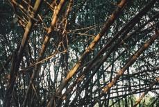 bambous5