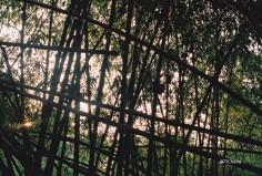 bambous6