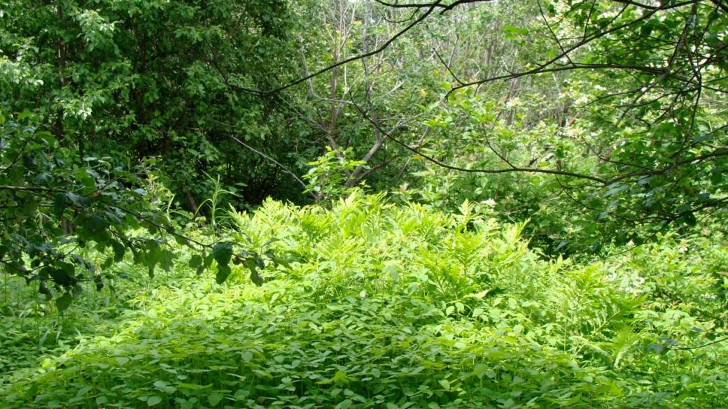 la-jungle1